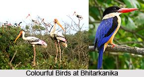 Bhitarkanika National Park, Kendrapara District, Odisha