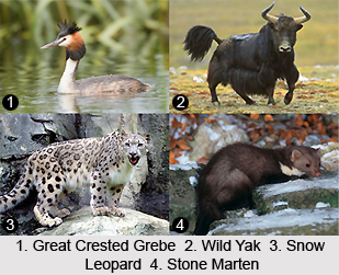 Nature Tours in Ladakh