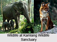 Kamlang Wildlife Sanctuary, Lohit District, Arunachal Pradesh