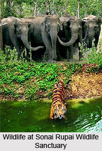 Sonai Rupai Wildlife Sanctuary, Sonitpur District, Assam