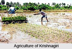 Krishnagiri , Dharmapuri , Tamil Nadu