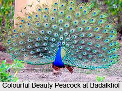 Badalkhol Wildlife Sanctuary, Chhattisgarh
