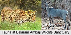 Balaram Ambaji Wildlife Sanctuary, Banaskantha District, Gujarat