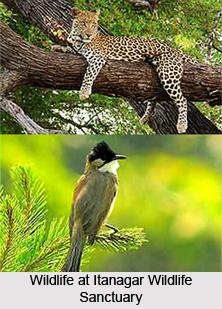 Itanagar Wildlife Sanctuary, Papum Pare District, Arunachal Pradesh