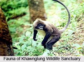 Khawnglung Wildlife Sanctuary, Aizawl, Mizoram