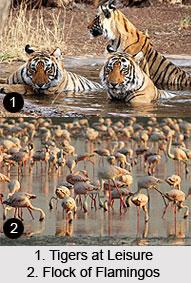 Kutch Desert Wildlife Sanctuary, Rann of Kutch, Gujarat