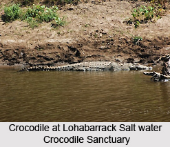 Lohabarrack Salt Water Crocodile Sanctuary, Andaman Islands