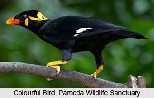 Pameda Wildlife Sanctuary, Dantewada District, Chhattisgarh