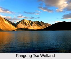 Pangong Tso Wetland Conservation Reserve, Ladakh