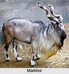Lachipora Wildlife Sanctuary, Jammu and Kashmir