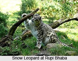 Rupi Bhaba Sanctuary, Kinnaur District, Himachal Pradesh