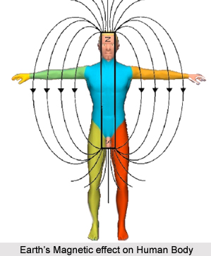 Earth's Magnetic Effect on Human Body