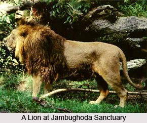 Jambughoda Wildlife Sanctuary, Panchmahal District, Gujarat
