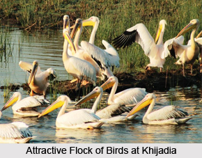 Khijadiya Bird Sanctuary, Jamnagar District, Gujarat