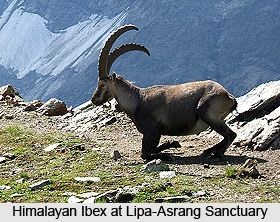 Lipa-Asrang Sanctuary, Kinnaur District, Himachal Pradesh
