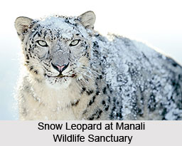 Manali Wildlife Sanctuary, Kullu District, Himachal Pradesh
