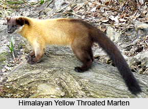 Naina Devi Wildlife Sanctuary, Bilaspur District, Himachal Pradesh