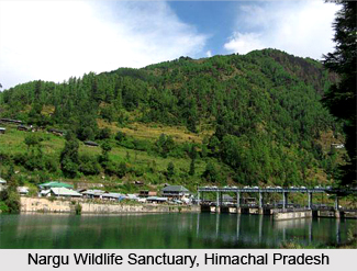 Nargu Wildlife Sanctuary, Mandi District, Himachal Pradesh