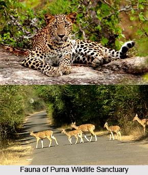 Purna Wildlife Sanctuary, Dang District, Gujarat