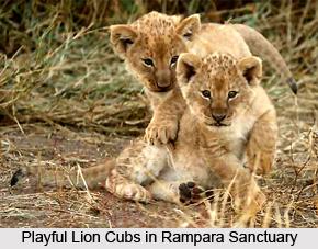 Rampara Wildlife Sanctuary, Rajkot, Gujarat