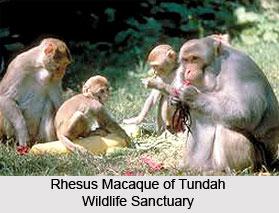 Tundah Wildlife Sanctuary, Chamba District, Himachal Pradesh