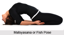 Matsyasana