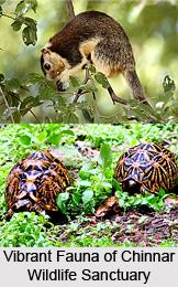 Chinnar Wildlife Sanctuary, Idukki District, Kerala