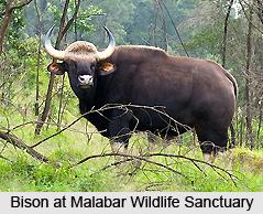 Malabar Wildlife Sanctuary, Kozhikode District, Kerala