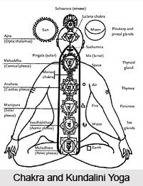 Seven Major Chakras , Kundalini Yoga