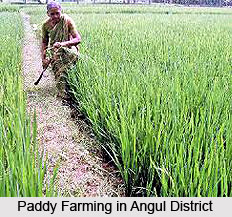 Economy of Angul District