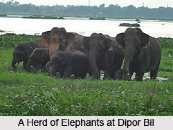 Dipor Bil, Kamrup District, Assam