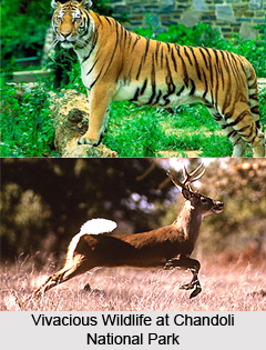 Chandoli National Park, Sangli District, Maharashtra