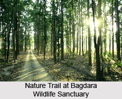 Bagdara Wildlife Sanctuary, Sidhi District, Madhya Pradesh