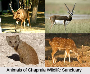 Chaprala Wildlife Sanctuary, Gadchiroli District, Maharashtra