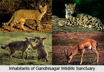 Gandhisagar Wildlife Sanctuary, Mandsaur District, Madhya Pradesh