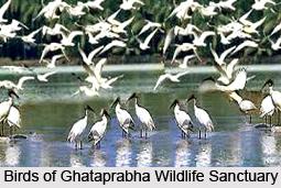 Ghataprabha Wildlife Sanctuary, Belgaum district, Karnataka