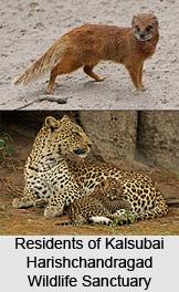 Kalsubai Harishchandragad Wildlife Sanctuary, Maharashtra