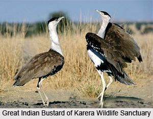 Karera Wildlife Sanctuary, Shivpuri district, Madhya Pradesh