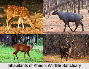 Kheoni Wildlife Sanctuary, Dewas District, Madhya Pradesh