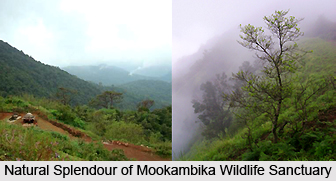 Mookambika Wildlife Sanctuary, Udupi District, Karnataka
