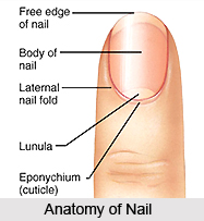 Nail Diagnosis in Ayurveda