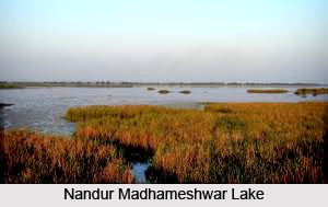 Nandur Madhmeshwar Bird Sanctuary, Nashik District, Maharashtra