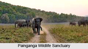Painganga Wildlife Sanctuary, Yavatmal district, Maharashtra