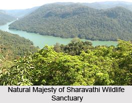 Sharavathi Wildlife Sanctuary, Shimoga District, Karnataka
