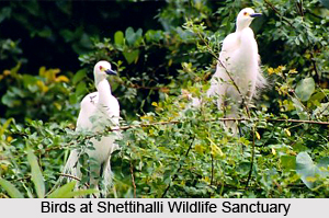 Shettihalli Wildlife Sanctuary, Shimoga District, Karnataka