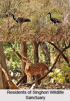 Singhori Wildlife Sanctuary, Raisen District, Madhya Pradesh