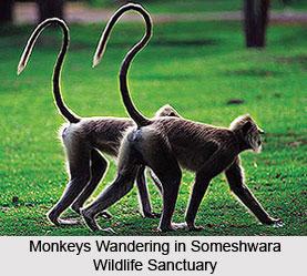Someshwara Wildlife Sanctuary, Udupi District, Karnataka