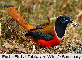 Talakaveri Wildlife Sanctuary, Kodagu District, Karnataka