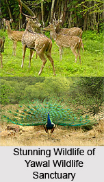 Yawal Wildlife Sanctuary, Jalgaon District, Maharashtra