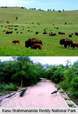 Kasu Brahmananda Reddy National Park, Hyderabad